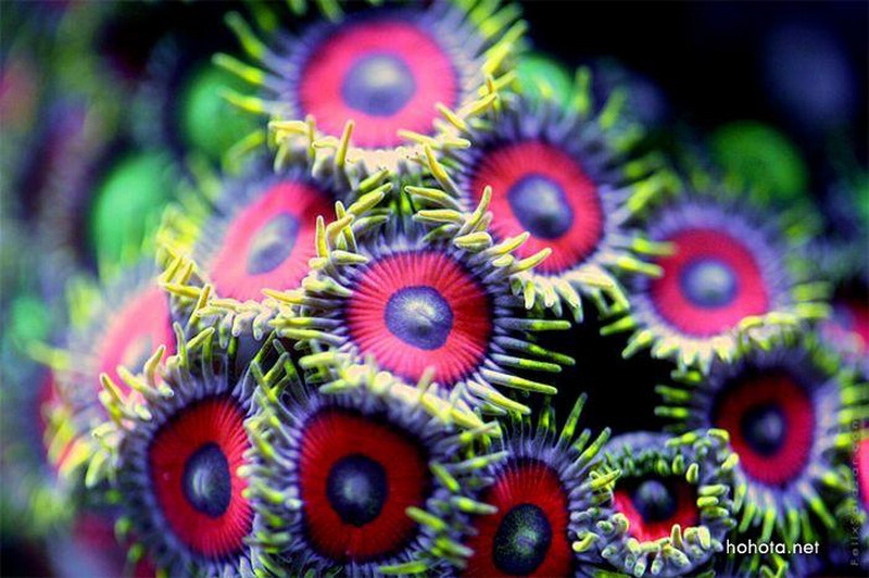 Коралловые рифы в ультрафиолете